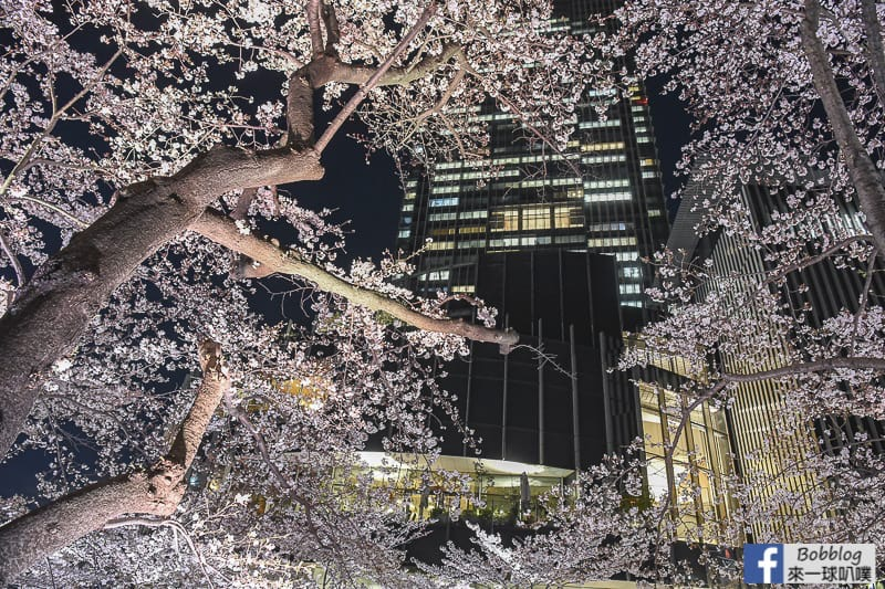 Midtown night sakura 21