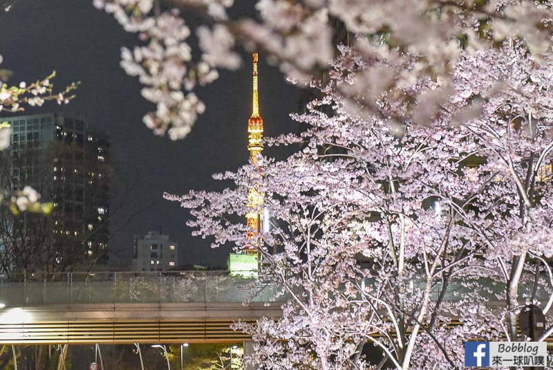 Midtown night sakura 24