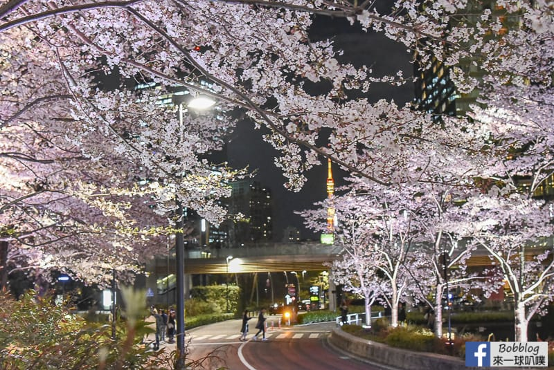 Midtown night sakura 25