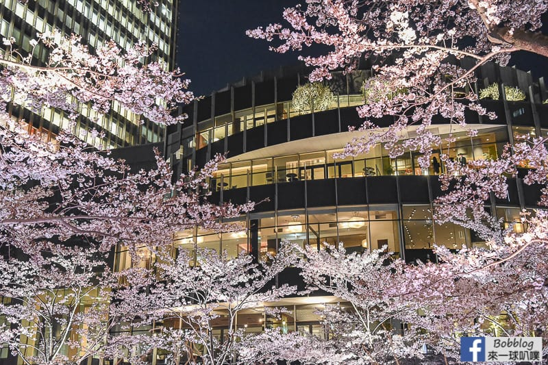 Midtown night sakura 26