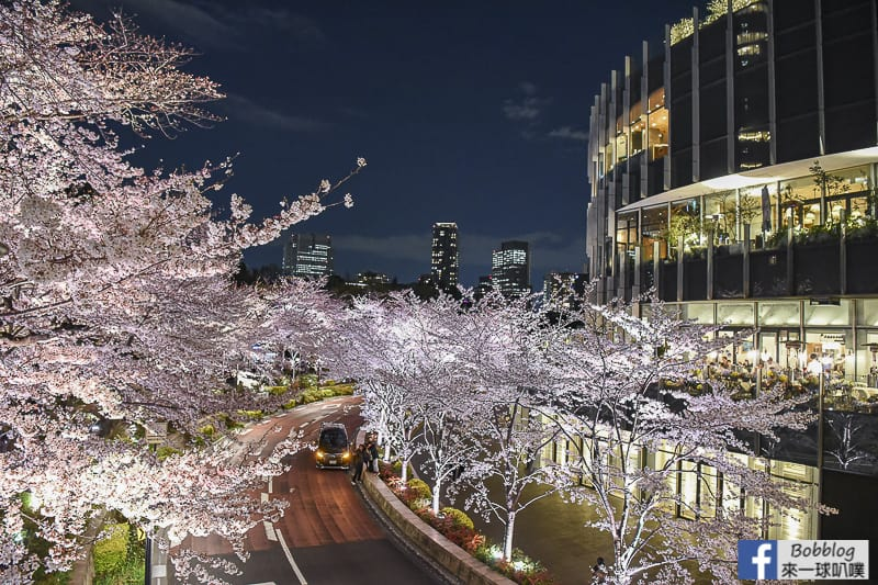 Midtown night sakura 17