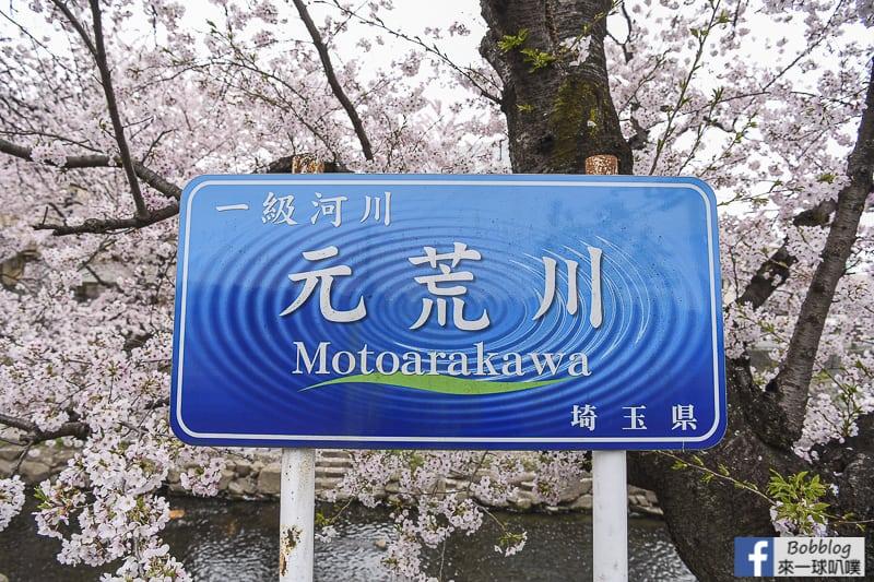 Moto arakawa river Sakura 11