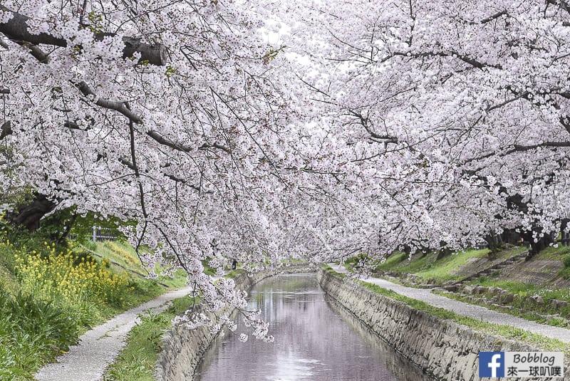 Moto arakawa river Sakura 23