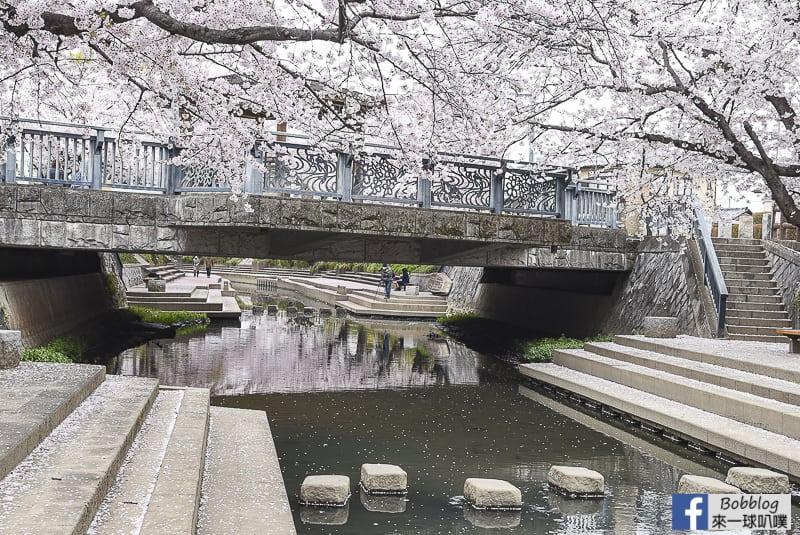 Moto arakawa river Sakura 35