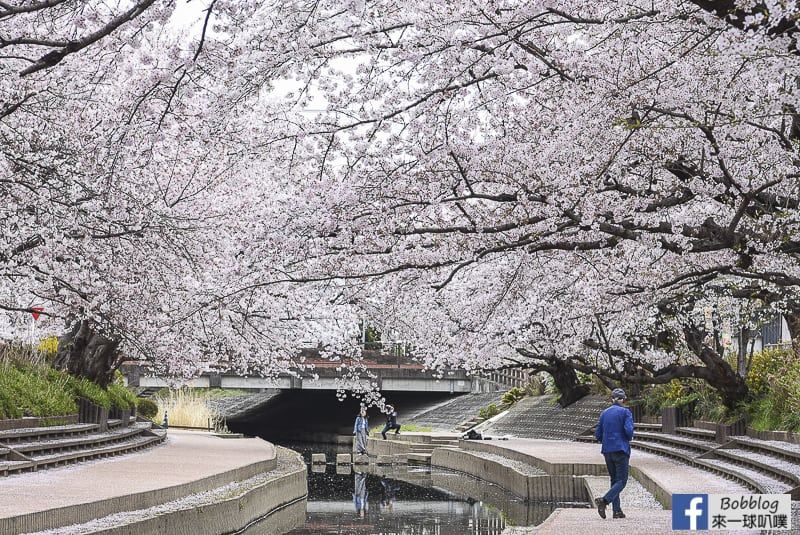 Moto arakawa river Sakura 36