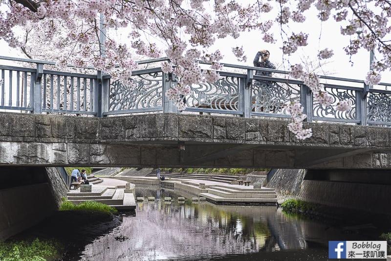 Moto arakawa river Sakura 42
