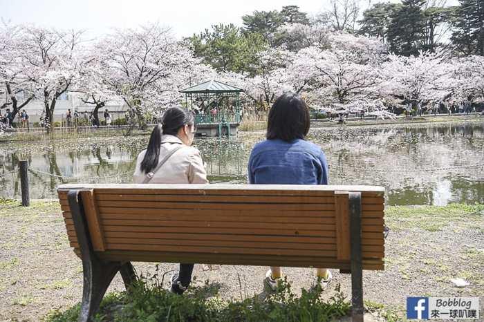 Omiya park sakura 11