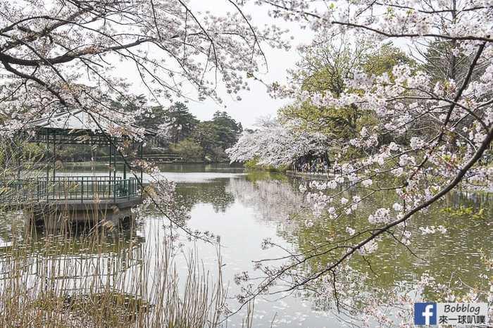 Omiya park sakura 20