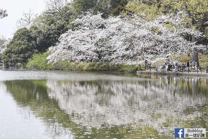 Omiya park sakura 24