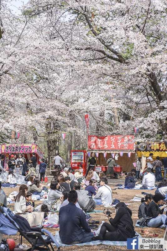 Omiya park sakura 35