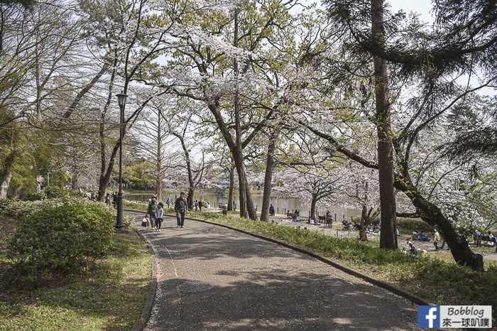 Omiya park sakura 5
