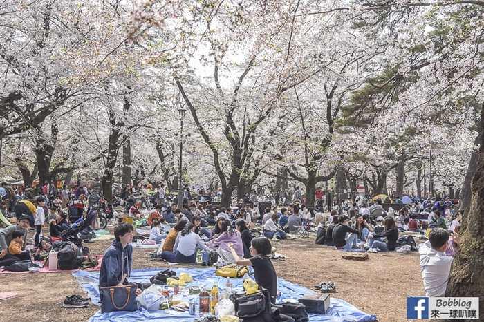 Omiya park sakura 51