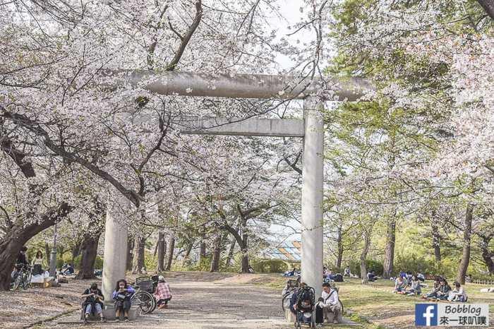 Omiya park sakura 53