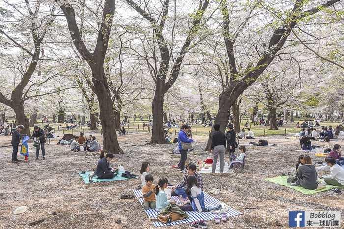 Omiya park sakura 55