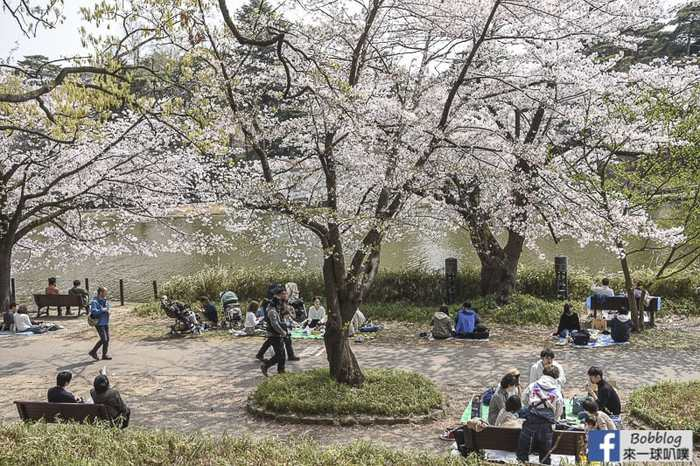 Omiya park sakura 6