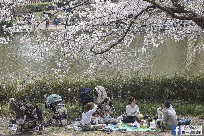 Omiya park sakura 7