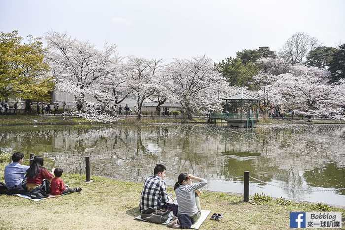 Omiya park sakura 9