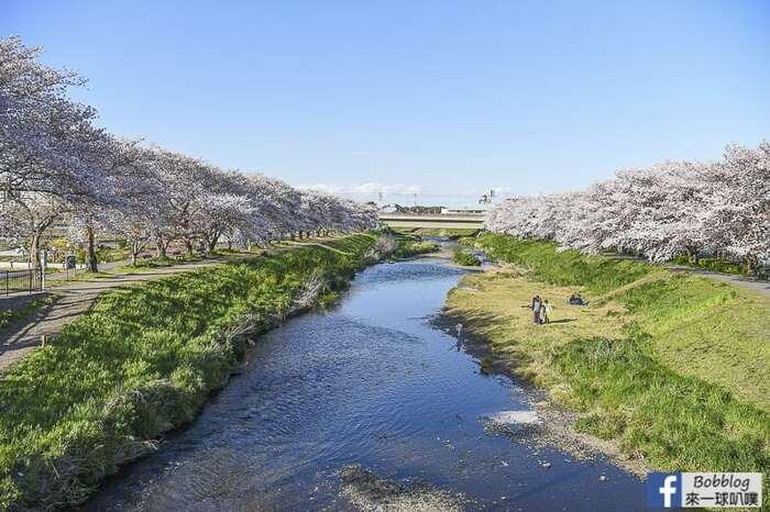 Saitama Kurome River Sakura 16