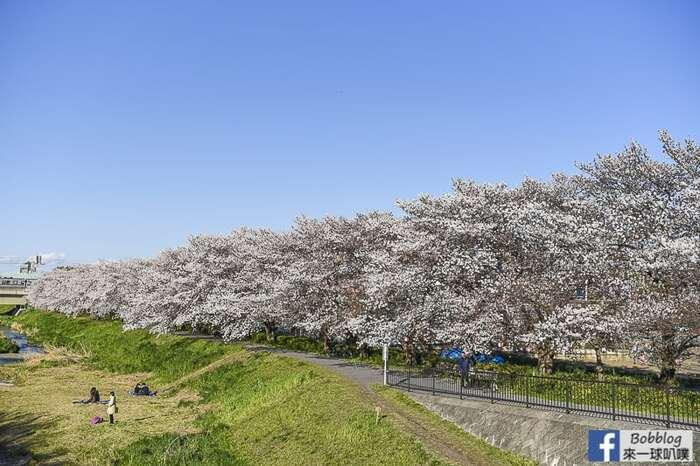 Saitama Kurome River Sakura 17