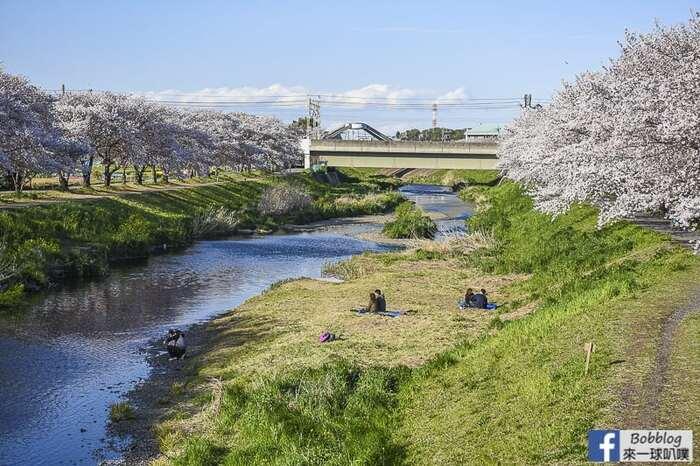 Saitama Kurome River Sakura 19