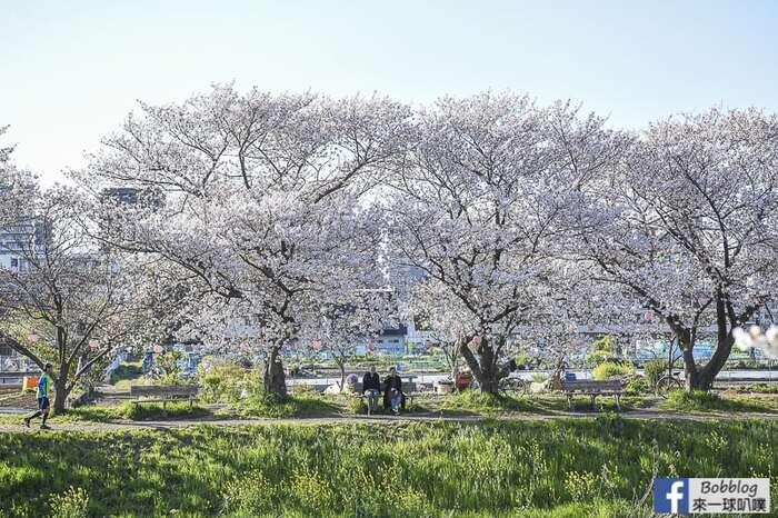 Saitama Kurome River Sakura 21