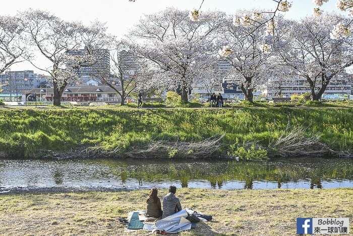 Saitama Kurome River Sakura 22