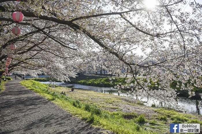 Saitama Kurome River Sakura 24