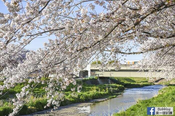 Saitama Kurome River Sakura 25