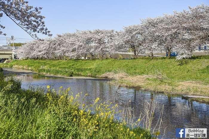 Saitama Kurome River Sakura 26