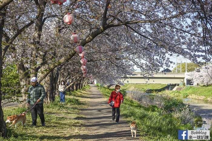 Saitama Kurome River Sakura 28