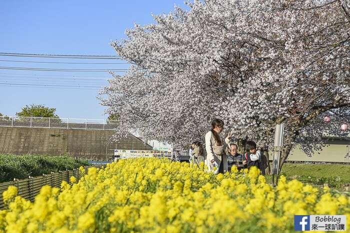 Saitama Kurome River Sakura 29