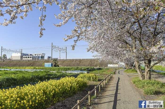 Saitama Kurome River Sakura 32