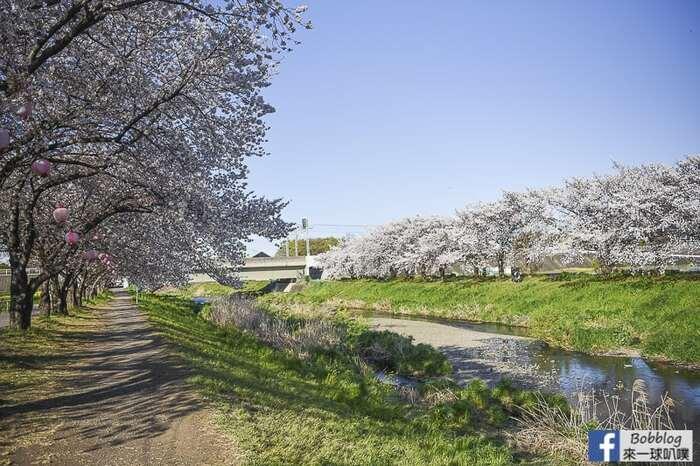Saitama Kurome River Sakura 9