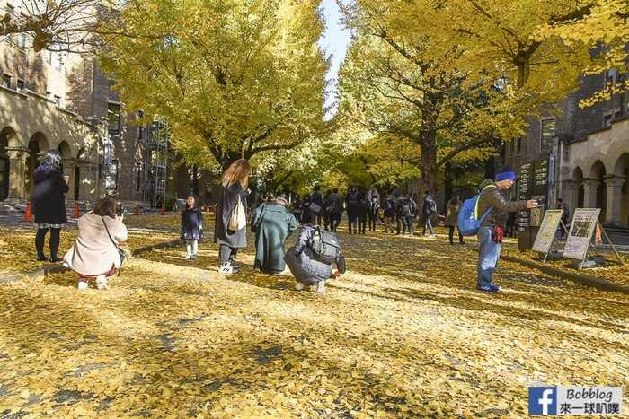 Tokyo university ginkgo tree 22