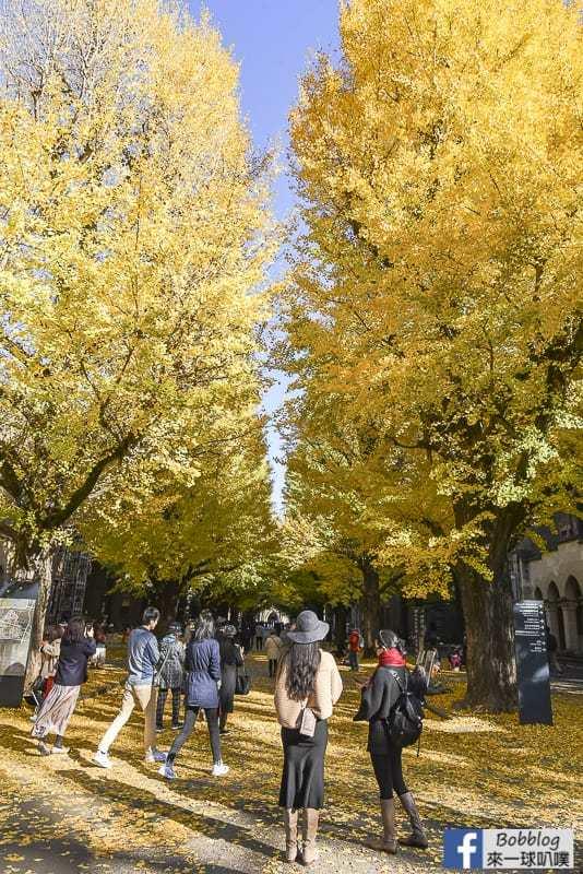 Tokyo university ginkgo tree 25