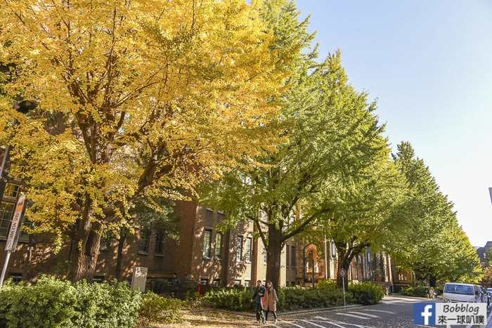 Tokyo university ginkgo tree 41