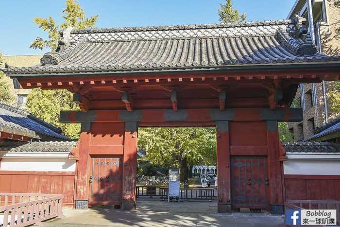 Tokyo university ginkgo tree 42