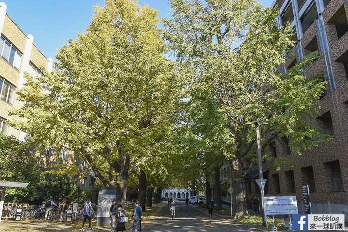 Tokyo university ginkgo tree 43