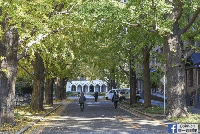 Tokyo university ginkgo tree 44