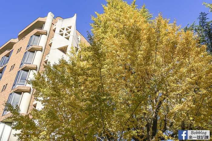 Tokyo university ginkgo tree 46