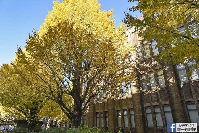 Tokyo university ginkgo tree 47