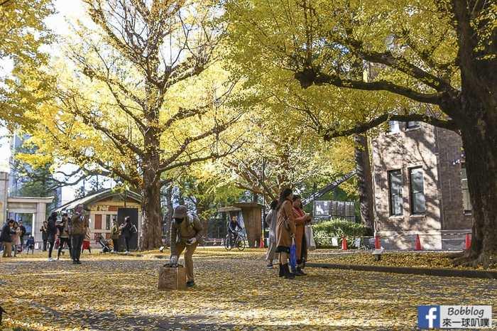 Tokyo university ginkgo tree 50