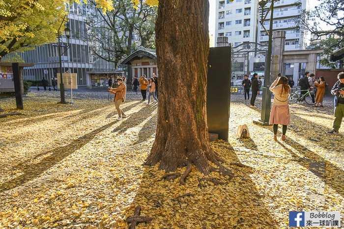 Tokyo university ginkgo tree 52