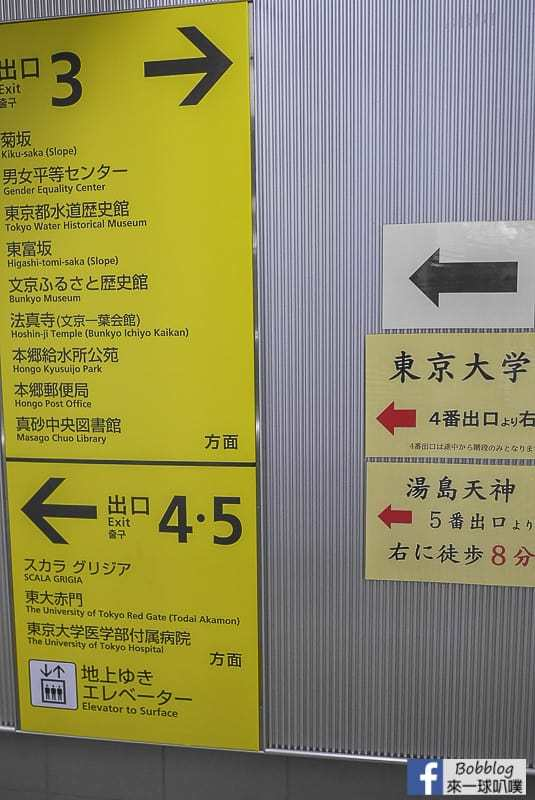 Tokyo university ginkgo tree 54