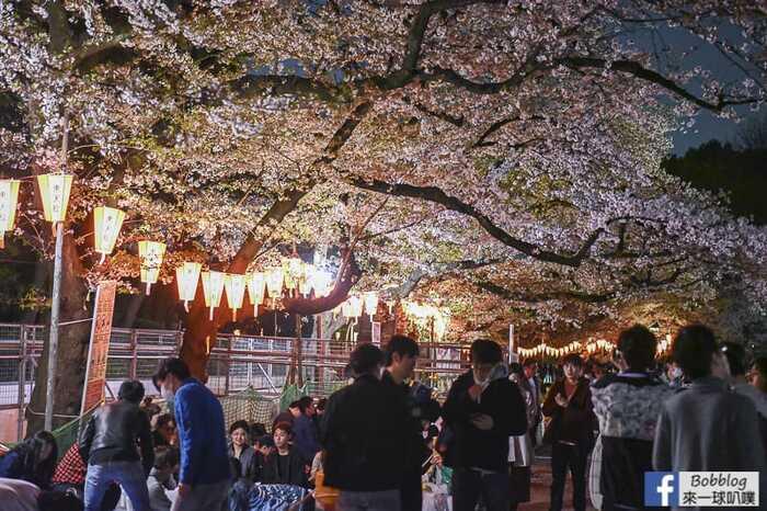Ueno Park night sakura 13