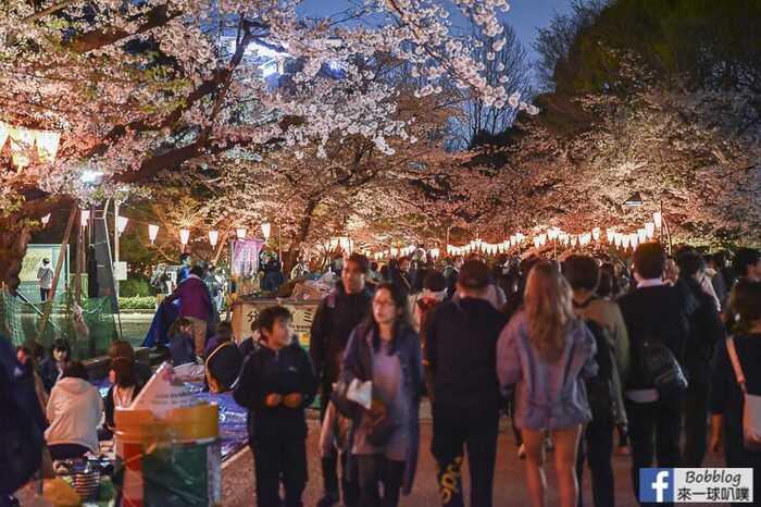 Ueno Park night sakura 15