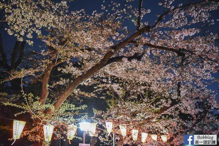Ueno Park night sakura 16