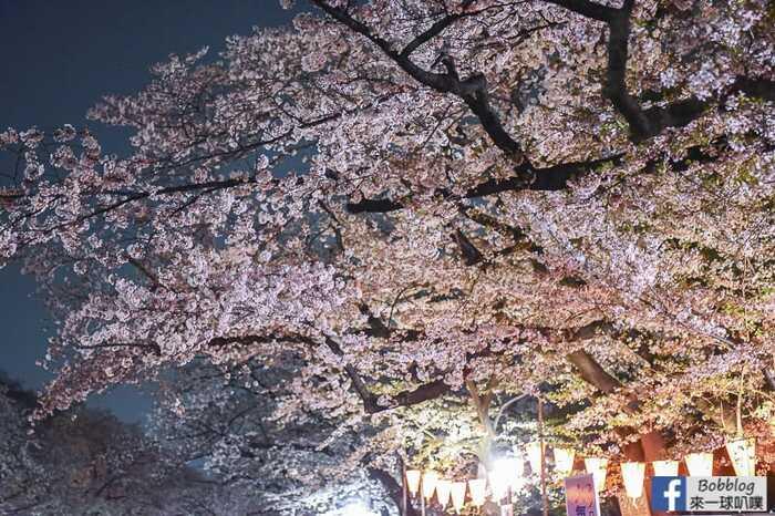 Ueno Park night sakura 21