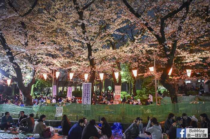 Ueno Park night sakura 24