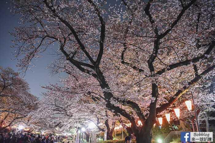 Ueno Park night sakura 8